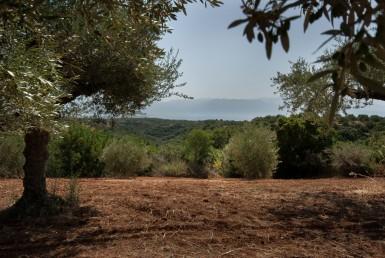 Έκταση 19 στρεμμάτων με ιδιωτική είσοδο σε φαράγγι και δάσος
