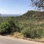 2760m² olive grove on the main road in Thouria